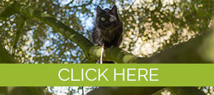 cat in a tree with click here message